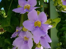 Blue Flower Vine - mlewallpapers com sky flower vine