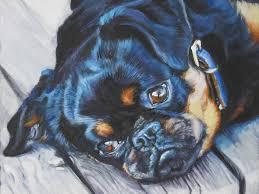 brussels griffon dog fine art canvas print brussels griffons