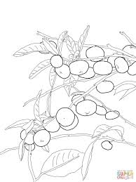 mandarin orange tree coloring page free printable coloring pages