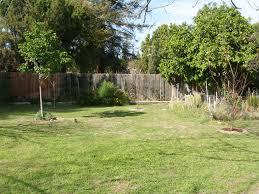 garden design garden design with spectacular backyard palm tree