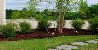charming design landscaping shrubs atlanta company plant
