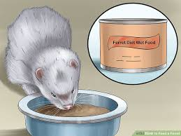 3 ways to feed a ferret wikihow