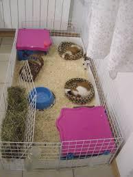 gabbie per conigli nani usate rosicchiamo tutti insieme novembre 2011
