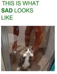 Sad Cat Meme - the face of pure sadness cat meme