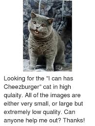 I Can Has Cheezburger Meme - 25 best memes about i can has cheezburger cat i can has
