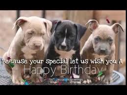 happy birthday pitbull greeting card youtube