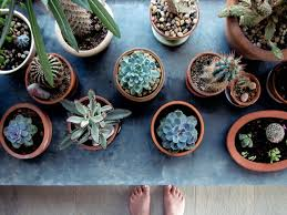 141 best cactus images on pinterest succulents gardening and