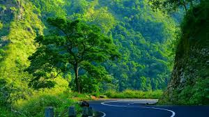 miscellaneous mountain forest beautiful light morning trees back