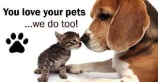 can pets and hardwood floors coexist flooring how to choose