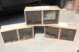 honey bee decorations for your home bobilin honey your source for beekeeping excellence