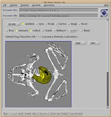 virtual frog dissection interactive 3d graphics via the web