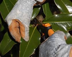 magnolia leaf wreath how to make a fresh magnolia wreath diy diy network made