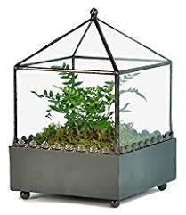 glass terrarium the lovely plants