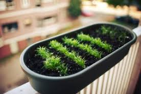urban gardening indoor and balcony gardening tips off the grid news