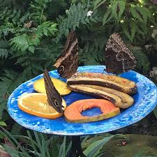 Wonderful Gardens Wonderful Gardens Fairly Compact Picture Of Key West Butterfly