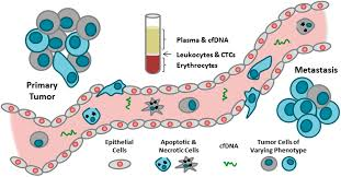 ijms free full text circulating tumor cells ctc and cell