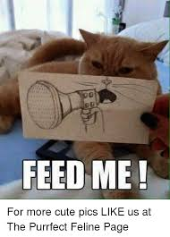 Feed Me Seymour Meme - 25 best memes about feed me feed me memes