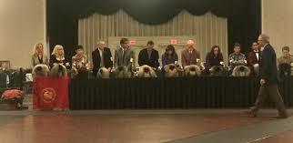 belgian sheepdog club of america national specialty courage dignity and self esteem u201d u2014 the essence of the pekingese
