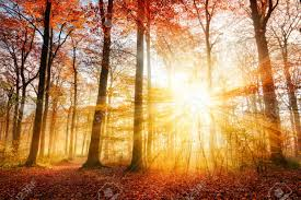 deciduous forest stock photos pictures royalty free deciduous deciduous forest warm autumn scenery in a forest with the sun casting beautiful rays