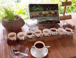 Luwak Coffee luwak coffee 8 others picture of bali pulina agro tourism