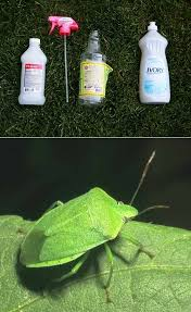Rubbing Alcohol Kills Bed Bugs Isopropyl Alcohol U003d Bug Spray In Fact It U0027s The Only Thing We U0027ve