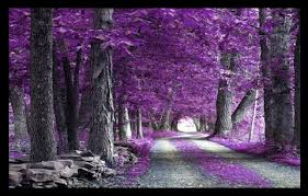 the purple tree and poetry pinayinrosecoloredglasses