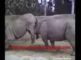 imagenes graciosas videos videos graciosos de animales youtube