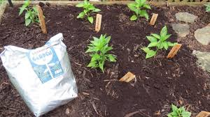 how to use organic coffee grounds in your garden u0026 get it for free