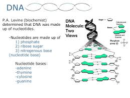 dna structure and replication worksheet answers fts e info