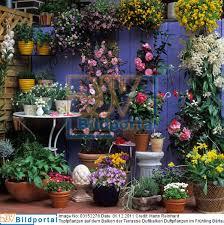 topfpflanzen balkon details zu 0003152278 topfpflanzen auf dem balkon der terrasse
