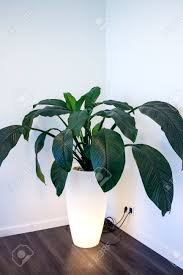 living plant in pot with lamp standing in corner of living room