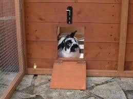 Rabbit Hutch For 4 Rabbits The Rabbit House Rabbit Sheds