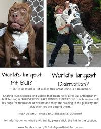 american pitbull terrier dog price pit bulls against misinformation help us stop the unethical and