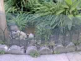box turtle habitat jpg