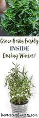 indoor herbs to grow growing herbs indoors tips for growing herbs indoors in the
