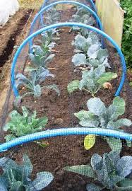 natural pest control remedies organic solutions for garden pests