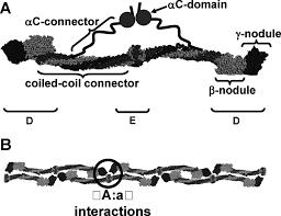 molecular mechanisms affecting fibrin structure and stability