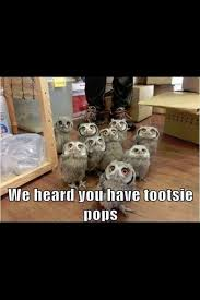 Where To Buy Tootsie Pops 43 Best Things We U003c3 Images On Pinterest Tootsie Pops Junior