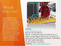 Minyak Bulus Asli Papua 0821 4800 0950 grosir minyak bulus asli agen minyak bulus asli ju