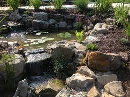 ecosystem fish and koi ponds a frog u0027s dream aquatic services