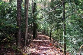 West Virginia forest images These 5 trails in west virginia will lead you to extraordinary ruins jpg