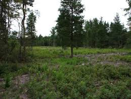 New Jersey forest images Wildlife habitat restoration projects in new jersey conserve jpg