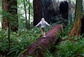 California Forest images California 39 s best road trip the redwood forests of humboldt jpg