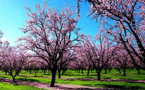 wallpaper full hd background spring widescreen wallpapers group 82