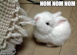 Meme Eat - eat bunny eat memes imgflip