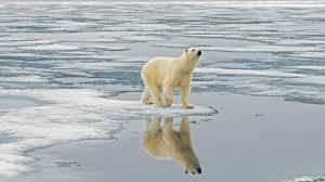 free download polar bear hd wallpapers desktop u2013 hd wallpapers
