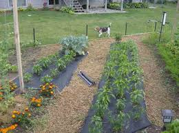 small backyard vegetable garden ideas backyard vegetable garden