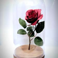 rose in glass best beauty and the beast rose in glass products on wanelo
