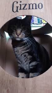 28 cat pods serenity cat pod so that s cool cat pods