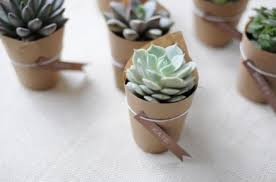 eco friendly wedding favors succulent wedding favors eco friendly wedding favors green